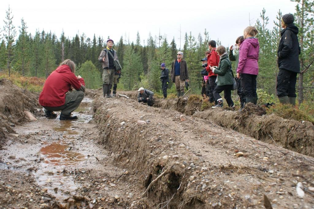 Körskador på Sveaskogs hygge vid Melakträskliden