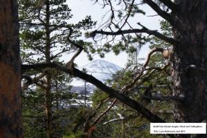 Änok - vi vann på att vi ställde oss i vägen för avverkning genom att överklaga Skogsstyrelsens beslut.